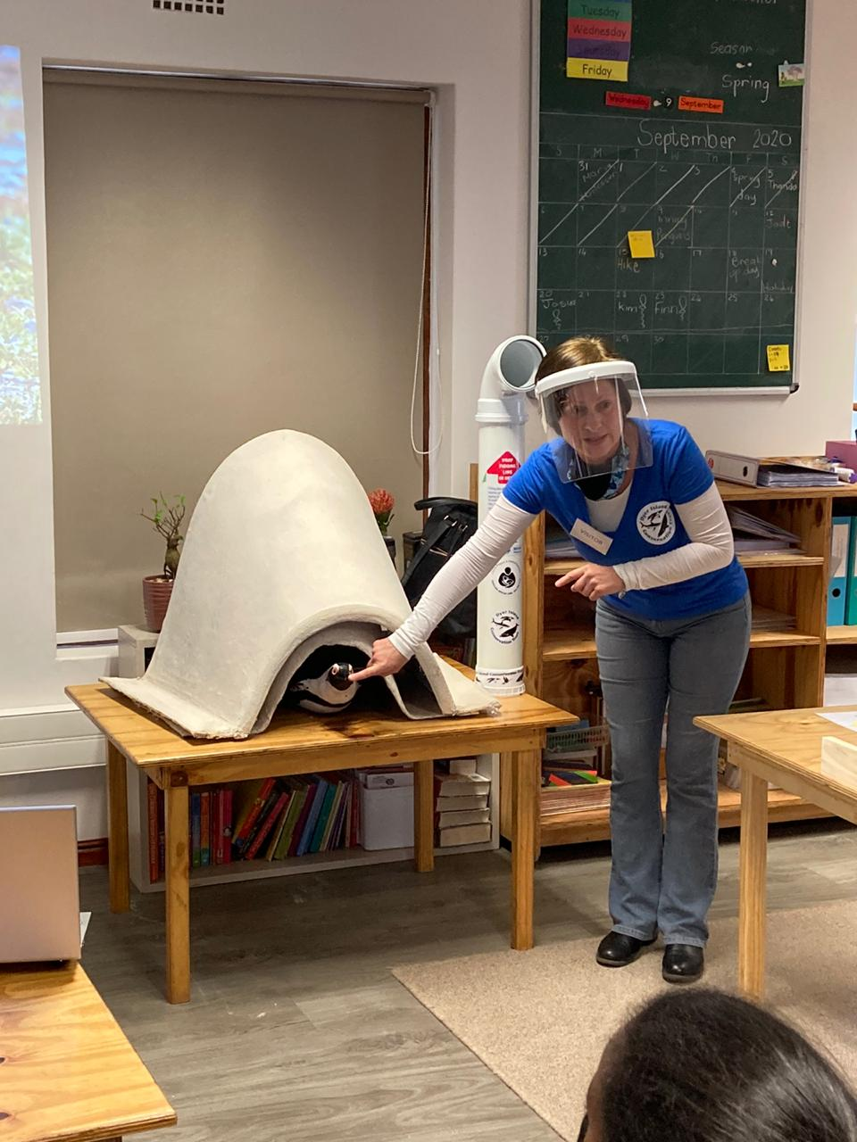 Sharks And Penguins At Generation School